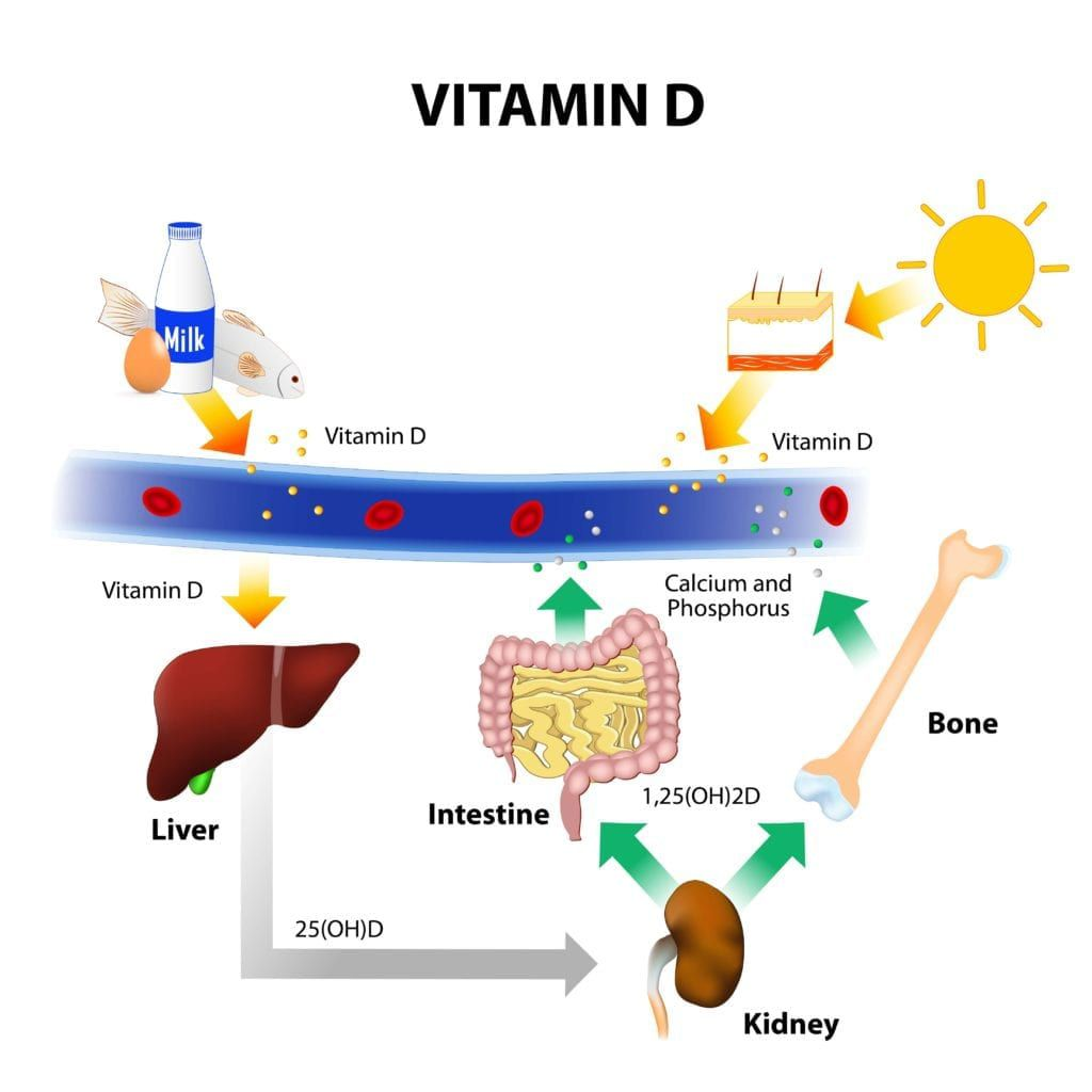 How vitamin D is absorbed by the body